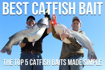 Best Catfish Bait