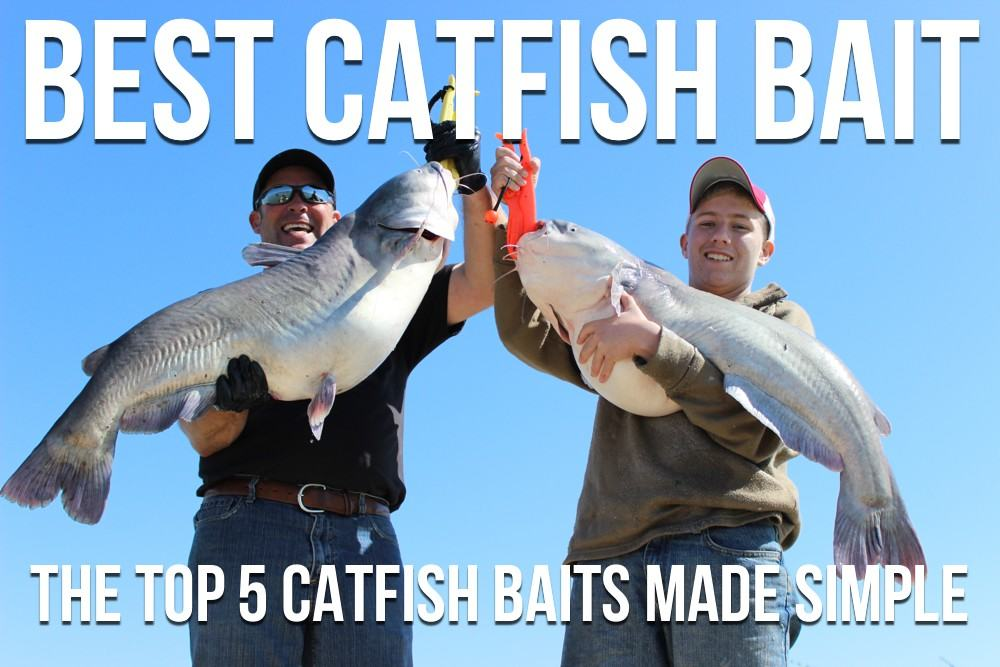 Best Catfish Bait: The Top 5 Catfish Baits Made Simple