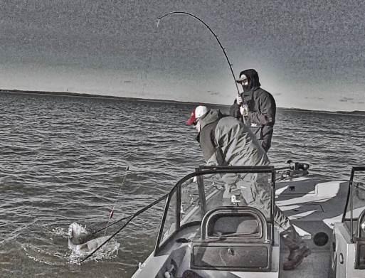 Drift Fishing Blue Catfish