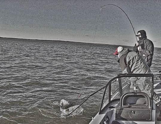 Whisker Seeker X3 Big Bertha Catfish Lure Action Drift Fishing