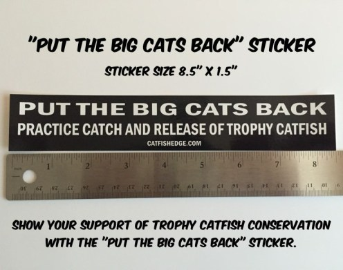 Put The Big Cats Back CATFISH CPR STICKER