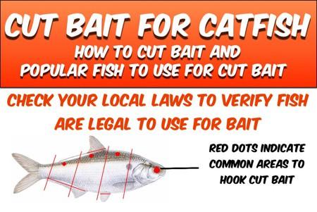 Cut Bait For Catfish