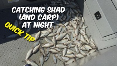 Catching Shad and Carp at Night For Catfish Bait