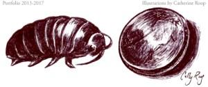 Pillbug & Penny