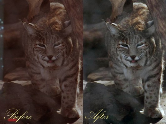 Photoshop class project - before & after.