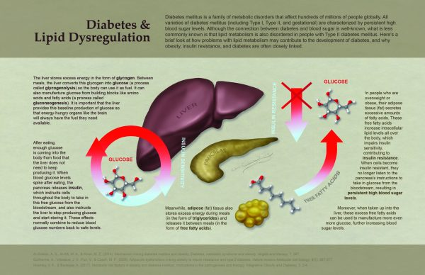 Explanatory graphic about diabetes and lipid dysregulation.
