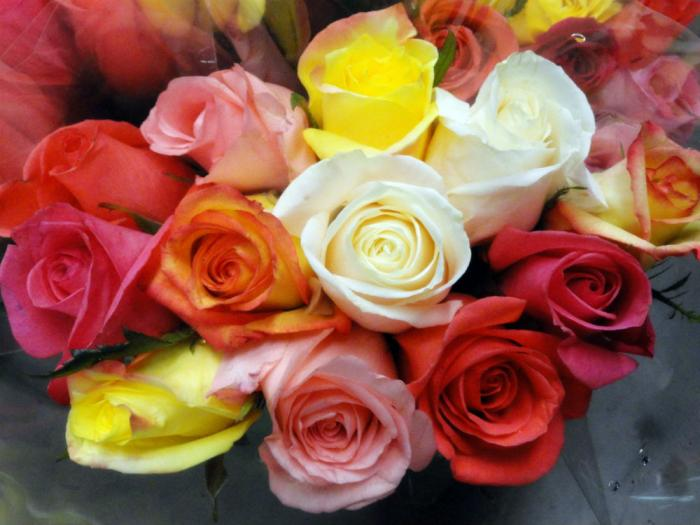 Roses signify love -and each color means something different.