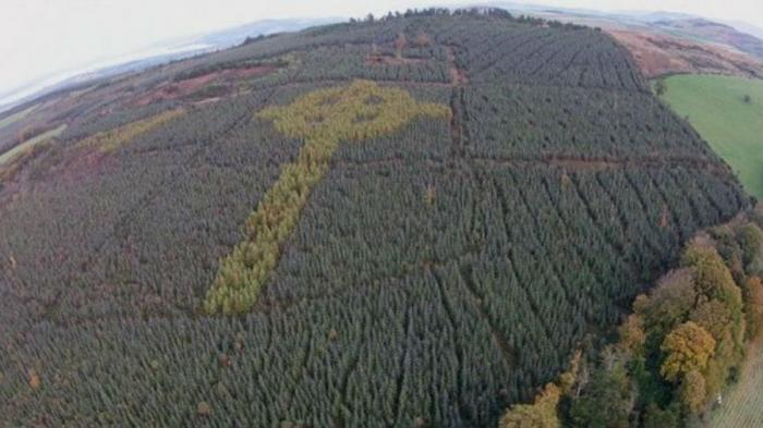 A mysterious Celtic cross grew in an Irish forest