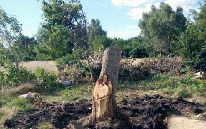The image appeared in a tree trunk.