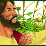 HOMILY FOR THE SIXTEENTH SUNDAY IN ORDINARY TIME YEAR A. (6)