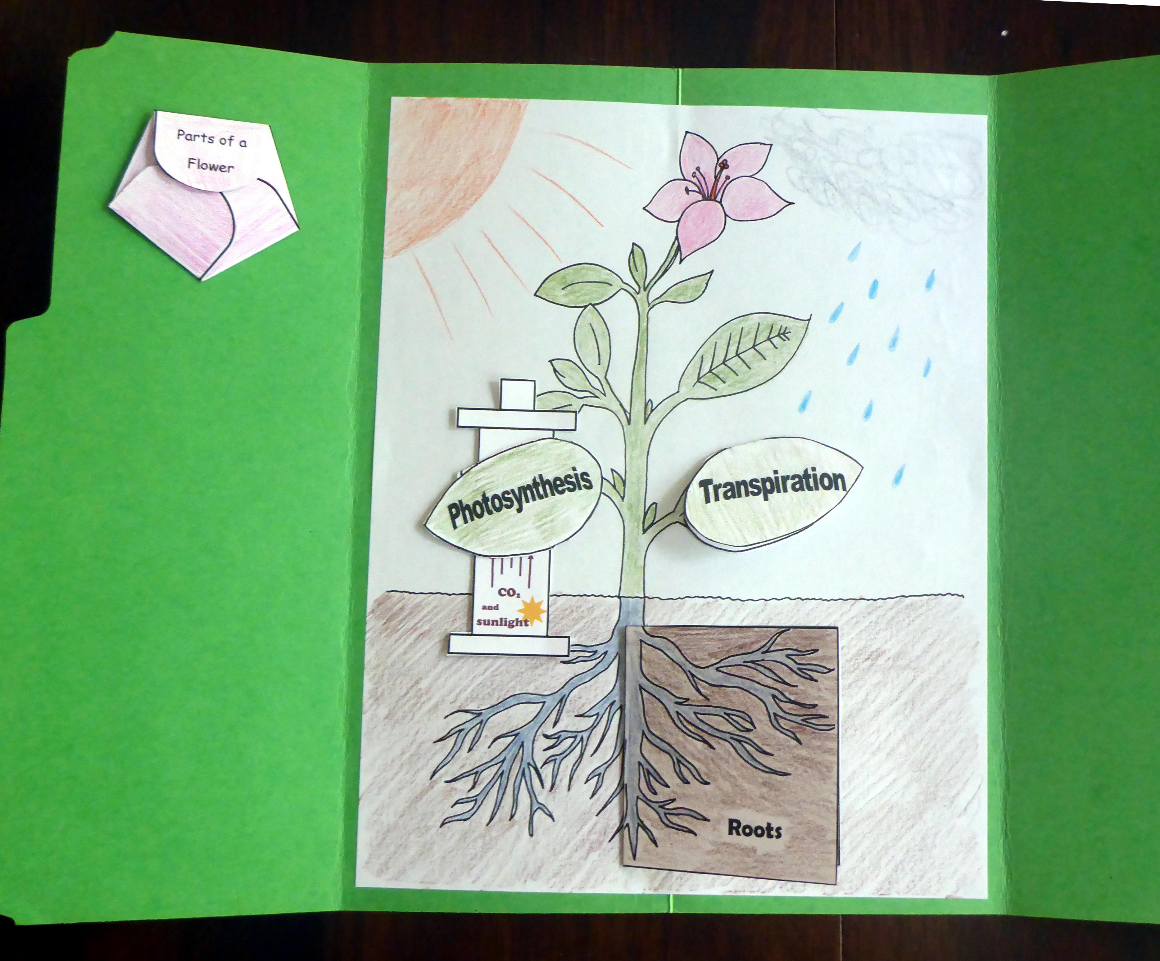 Tour Ii Quarter 1 Science Botany Lapbook