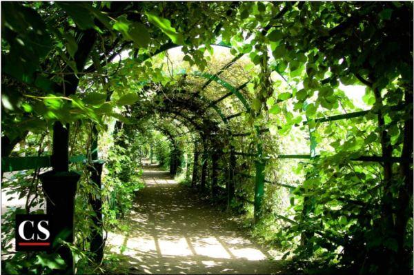 dream, window, path