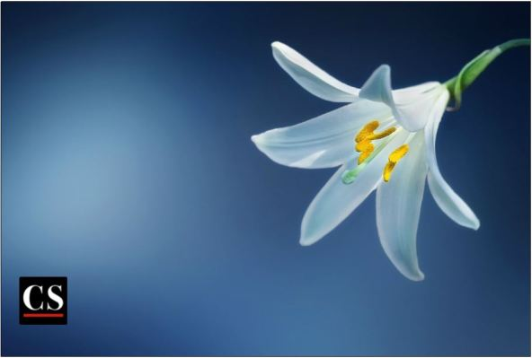 lily, chastity, purity, easter, mercy