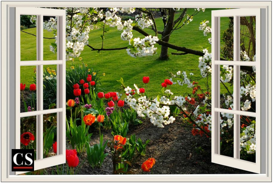window, view, neighbor, flowers