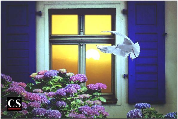 window, view, neighbor, dove, flower