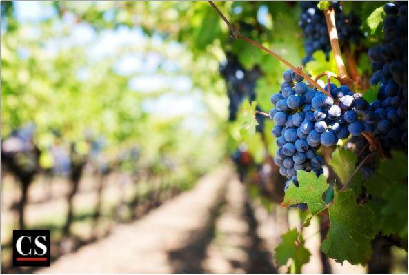 vineyard, hungers