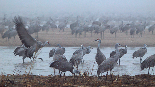 Cranes in Motion Project @ VisArts