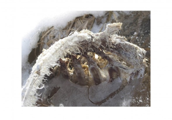 large_still-life-winter-2