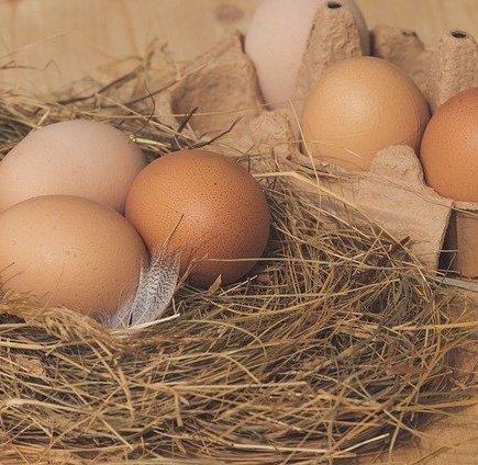 nest-4816101_640