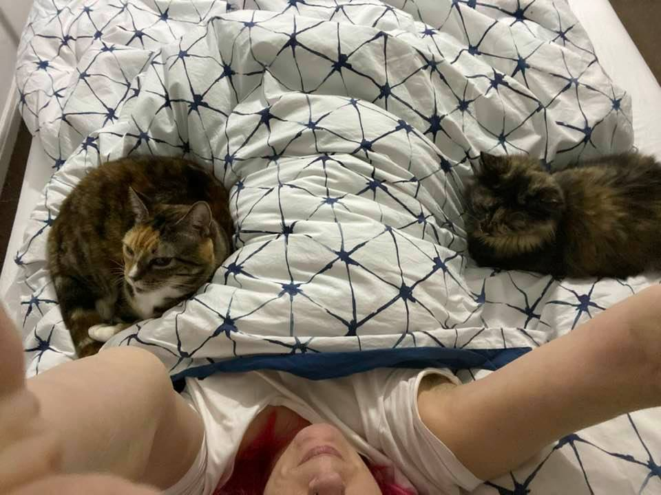 Lying in bed with my cats