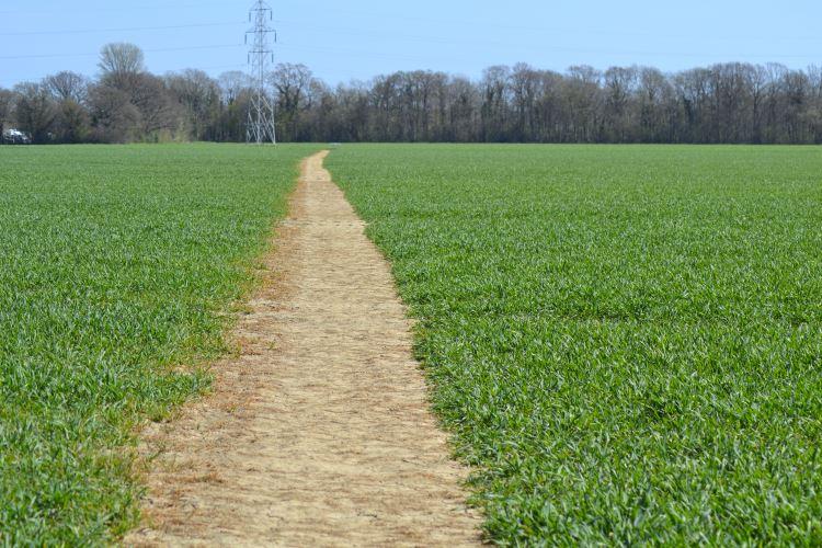 Path going through the Greensand Way in Kingsnorth, Ashford