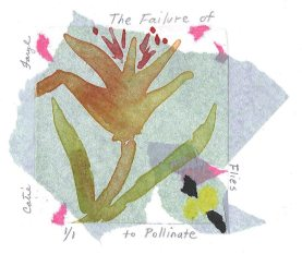 The Failure of Flies to Pollinate