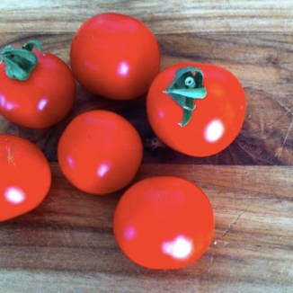 The glossiest tomatoes