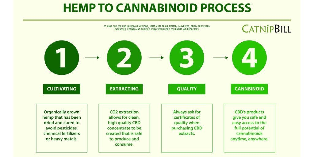 Common CBD Questions | Catnip Bill | catnipbill | CBD FAQs