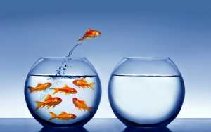 Fish Out of Water - Starting Your Own Business
