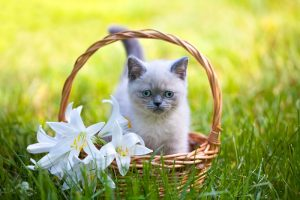 flowers that are deadly to cats