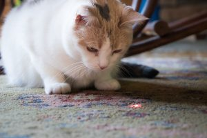 Why Your Cat Chases The Laser Pointer
