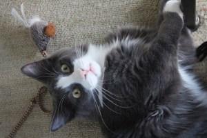 6 Activities For Your High-Energy Indoor Cat