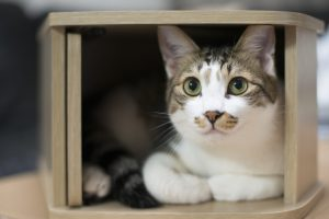 What is Causing Blood in Your Cat's Urine?