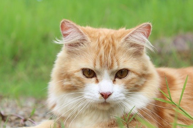 Aging Cats