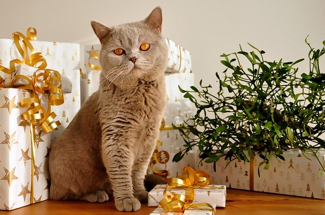Caring for Your Cat during the holidays