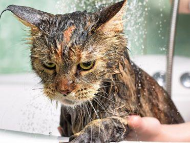 can getting a bath