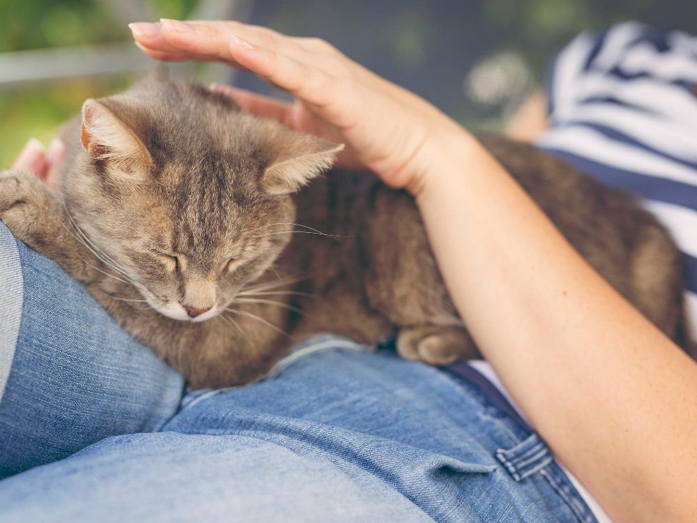 cat behavior love affection