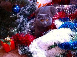 cat in Christmas garland