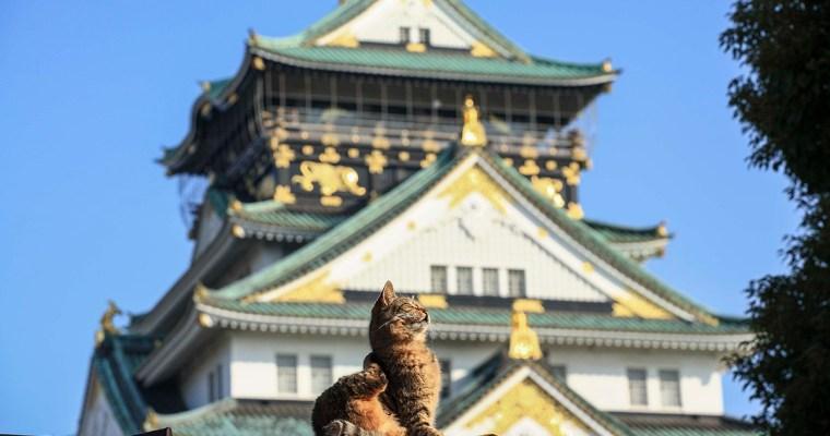 出展作家 阪さんが「アサヒカメラ ネコ写真コンテスト」でグランプリ授賞!