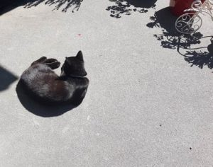Black cat lying on the concrete, looking like a circle