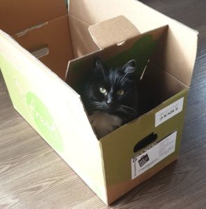 Cat sitting in a cardboard box, looking at the camera