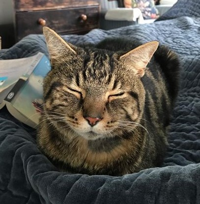 Cat with eyes closed, facing the camera sleeping