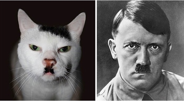 Cats that look like Hitler 2 Cats that Look like Hitler