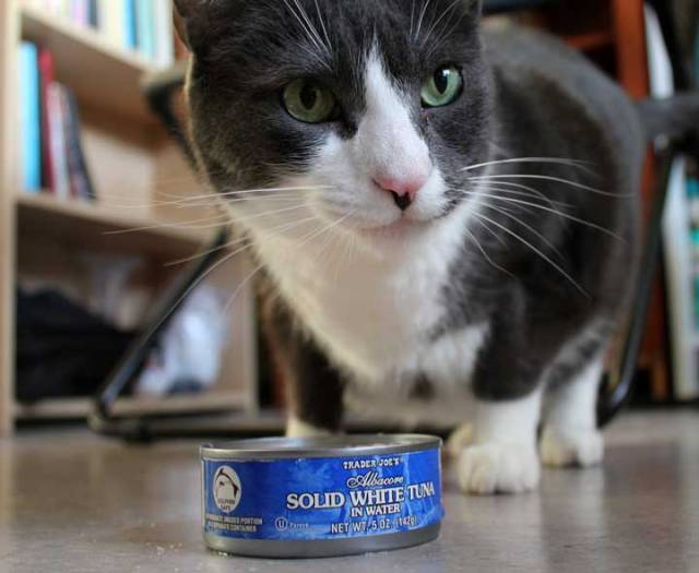 can cats eat canned tuna Can Cats Eat Canned Tuna? Important Query from Pet Owners
