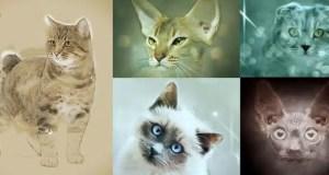 different-cat-breeds