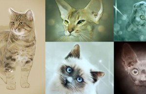 different-cat-breeds