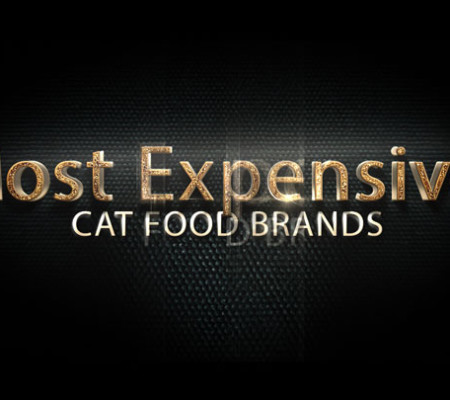 Can I Feed My Cat Different Brands Of Food