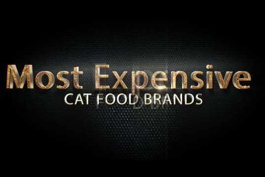 Cat-Food-Brands