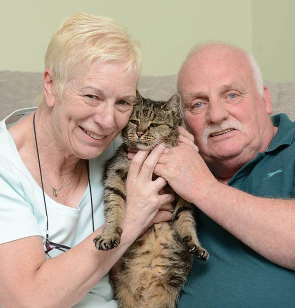 nutmeg the cat2 Meet Nutmeg The Cat, the 31 year old cat: The oldest living cat in the World