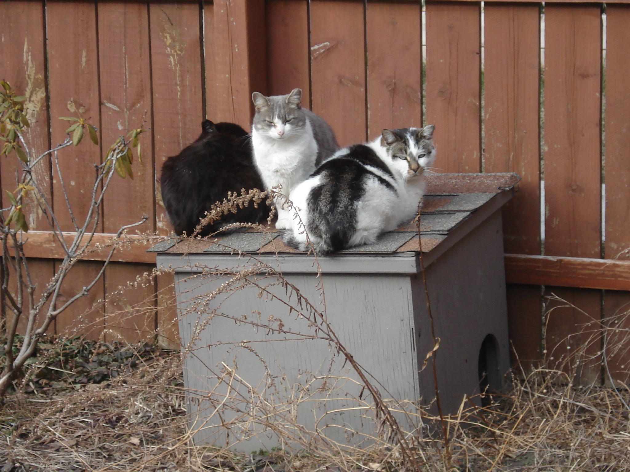 Outdoor Shelters For Animals : Outdoor cat houses in my community cats yard